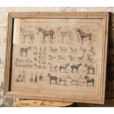 french equine anatomy